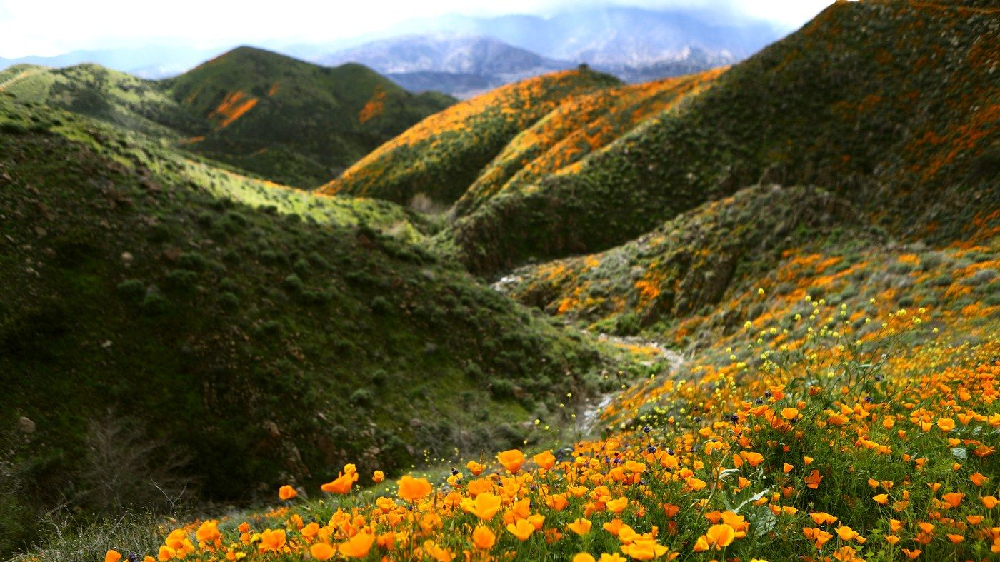 Tourists Are Already Destroying California's Super Bloom