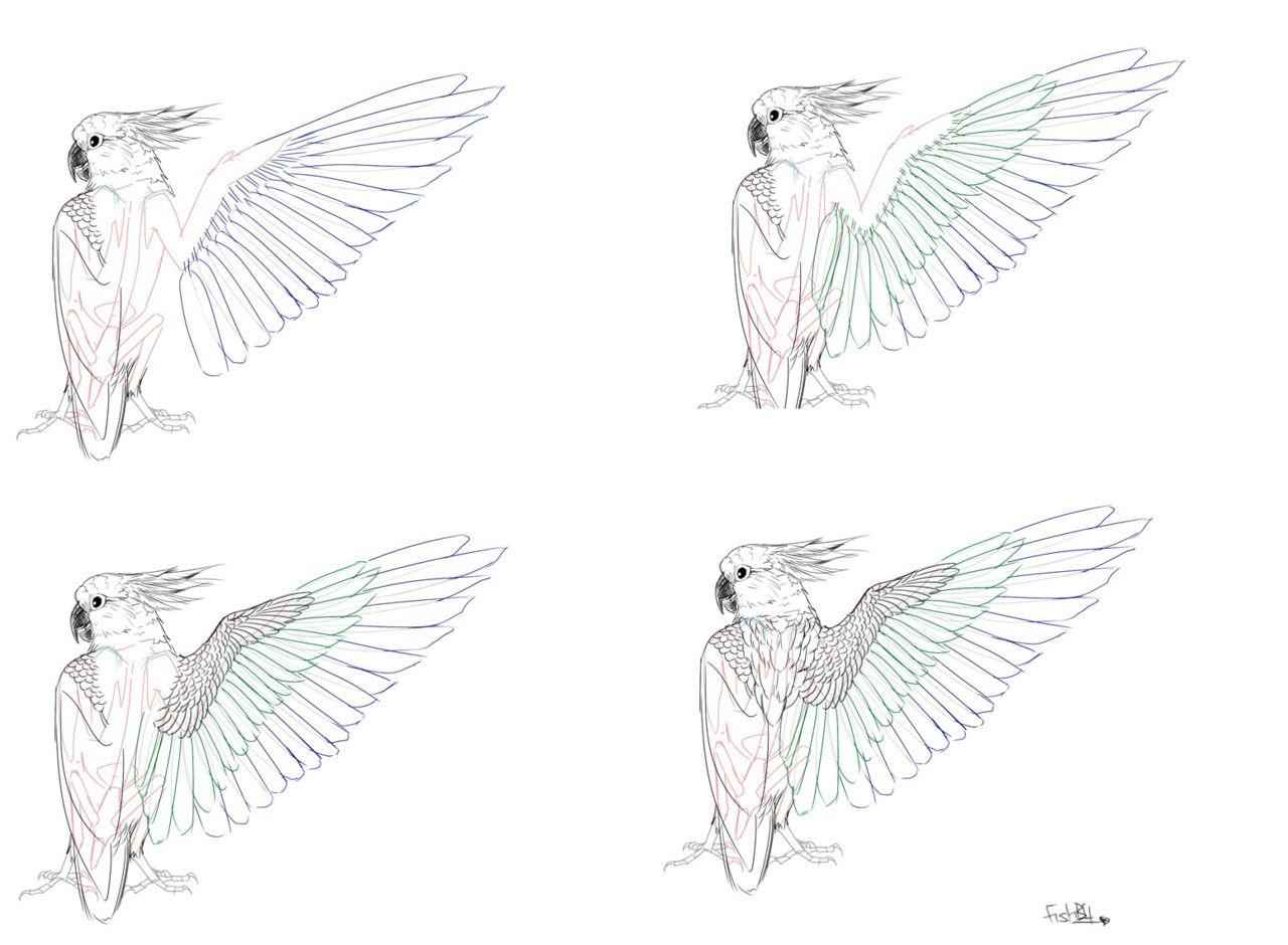 Bird wing tutorials
