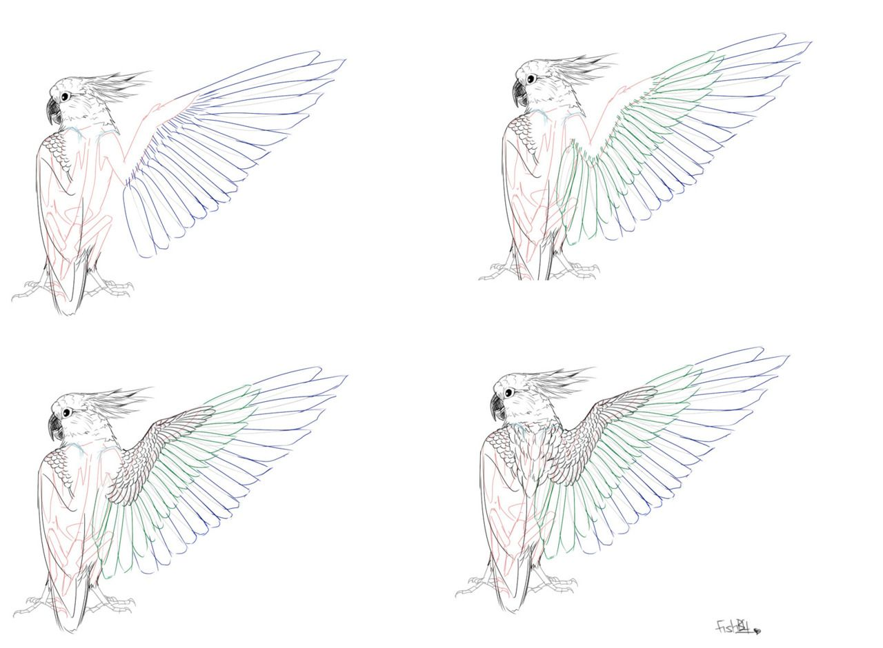 tumblr_ls35lbfMiN1r0v3zro9_r1_1280.jpg (1280×940) | Avian Anatomy ...