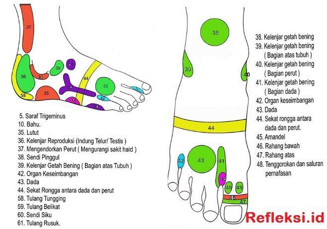 Titik Refleksi Punggung Kaki Akupresur Refleksiologi Sistem Tubuh Manusia