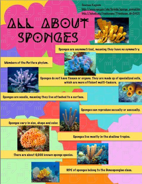 Porifera Infographic - Justine Salas Mationg | Phylum Porifera ...
