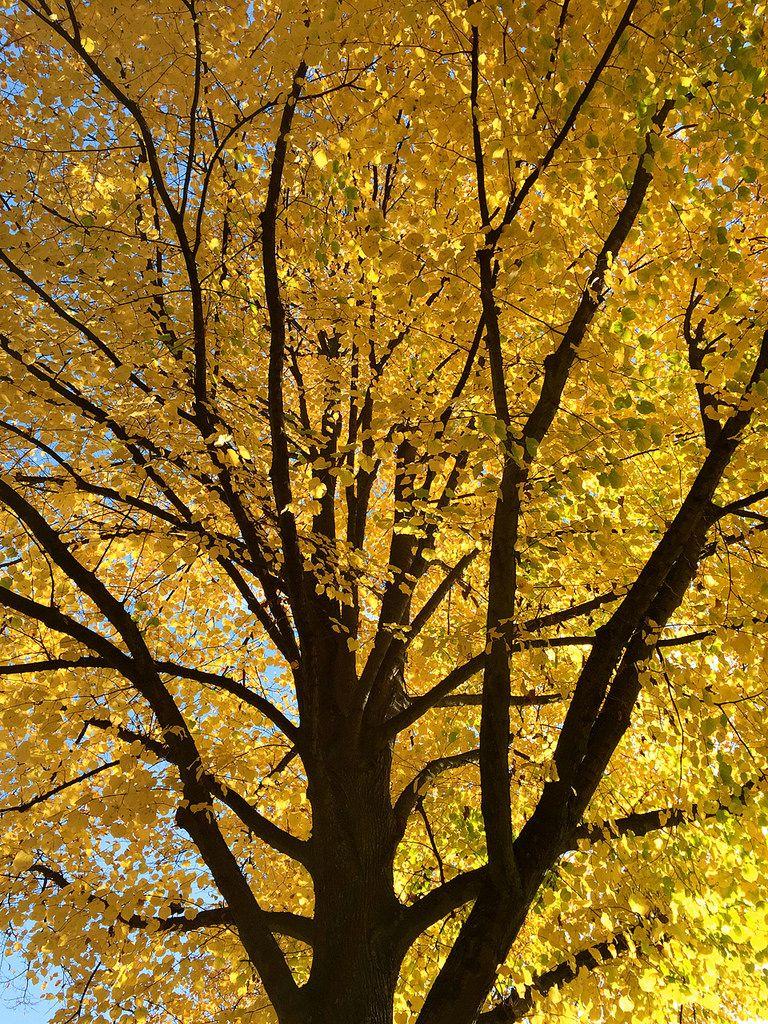Die Blätter färben sich rot und gelb und schweben langsam durch die ...