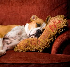 How To Get Dog Smell Out Of Couch Furniture Dog Smells