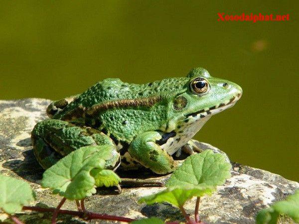 Mơ thấy ếch đánh con gì đổi đời, là điềm tốt hay xấu?