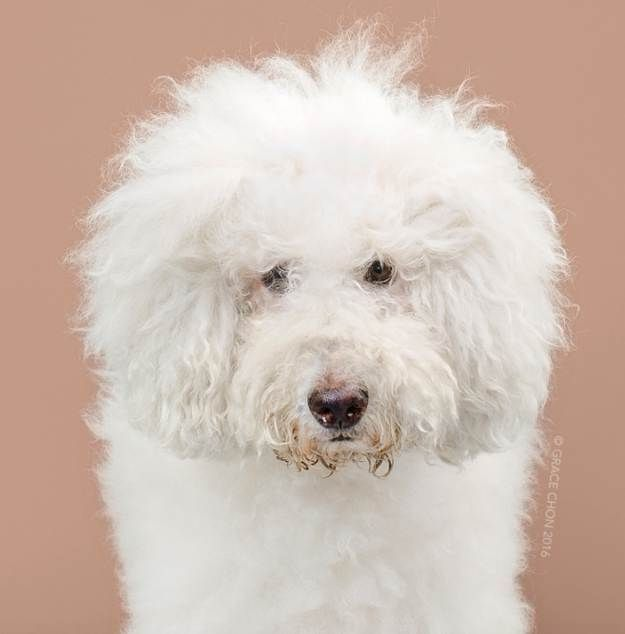 Dog Haircuts Awesome Before And After Looks Dog Haircuts Cute Dog Photos Smiling Dogs
