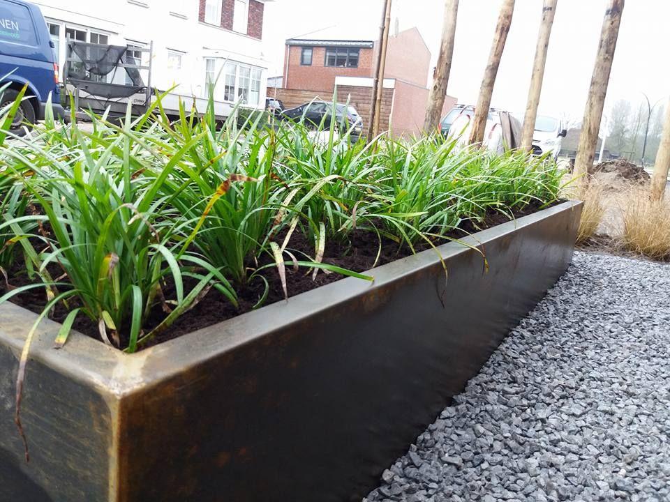 Groenblijvende Planten Voor Bloembakken.Cortenstaal Bloembak Met Groenblijvende Liriope S