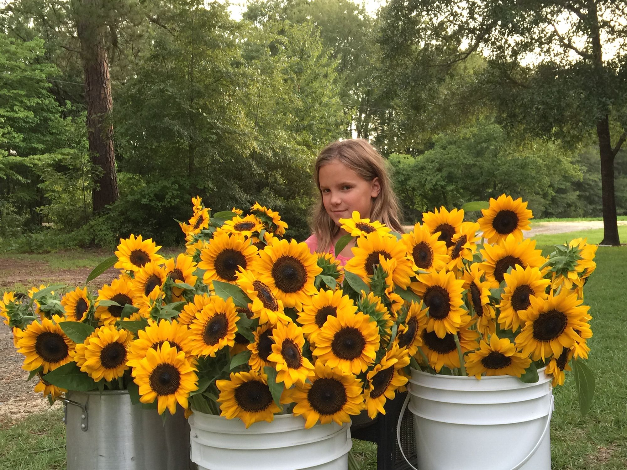 Gorgeous sunflowers from WilMor Farms, Metter,Ga! God's bountiful beauty!