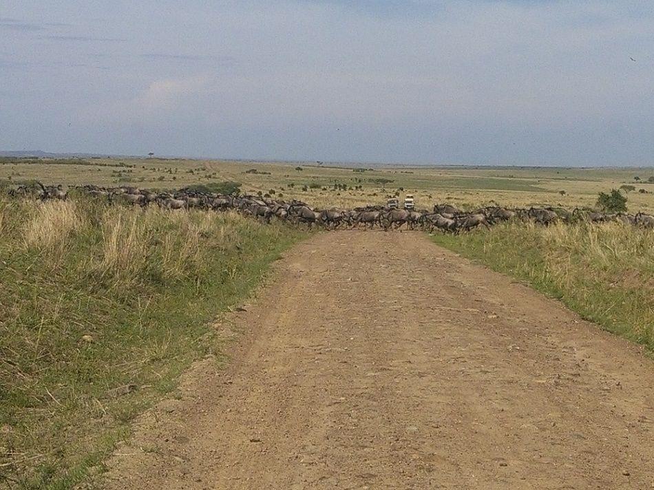 Browse exciting YHA Kenya Travel Tours And Safaris, Kenya