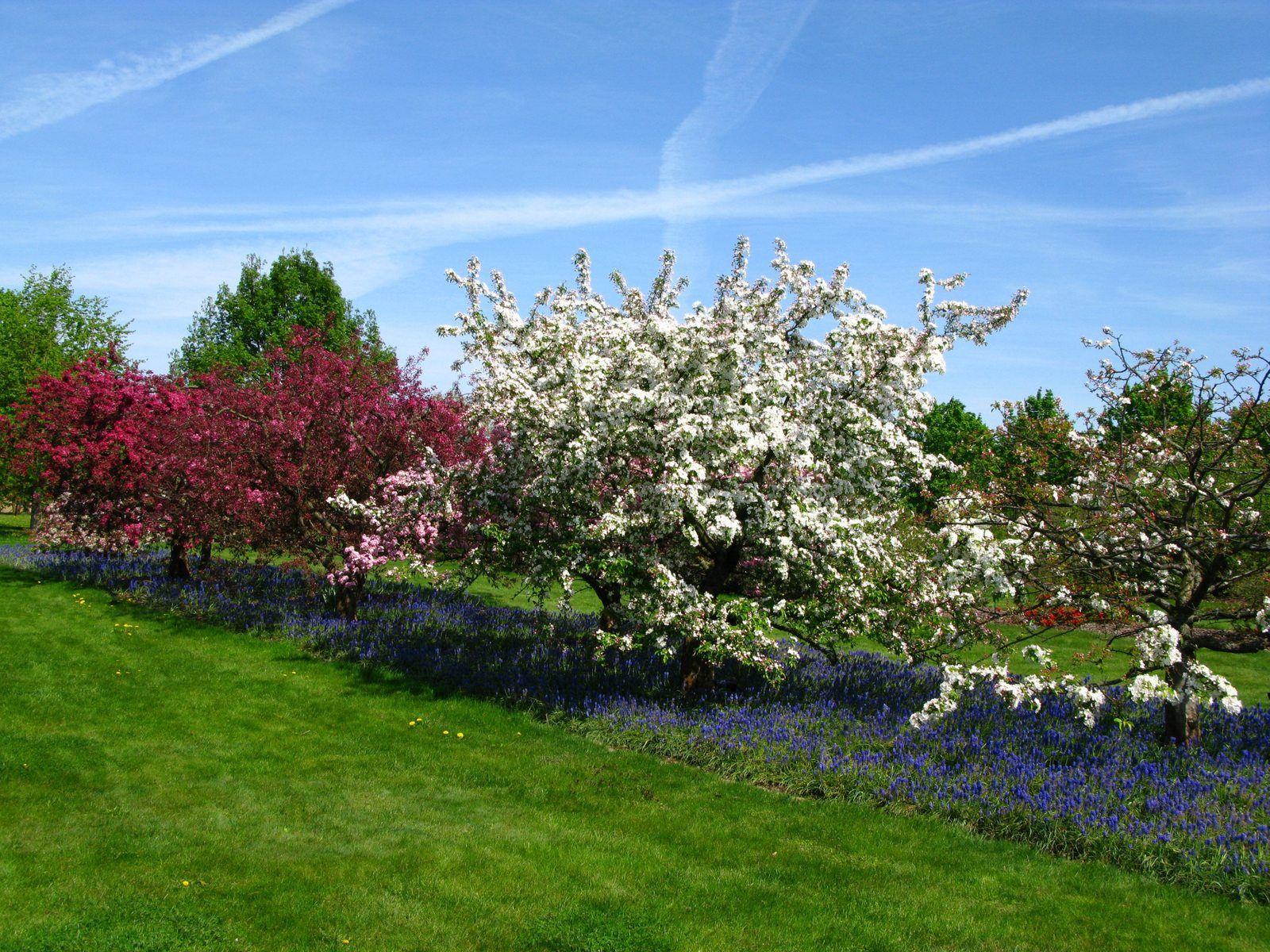 Gardenia Companion Planting What Are Good Companion Plants For Gardenia Apple Tree Gardening Planting Apple Trees Trees To Plant
