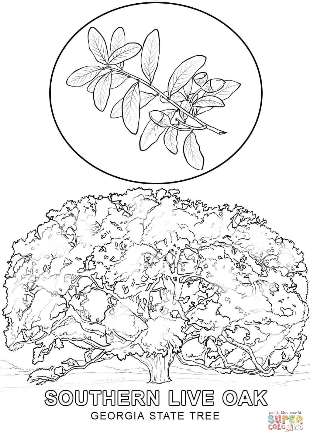 Click The Georgia State Tree Coloring Pages To View Printable