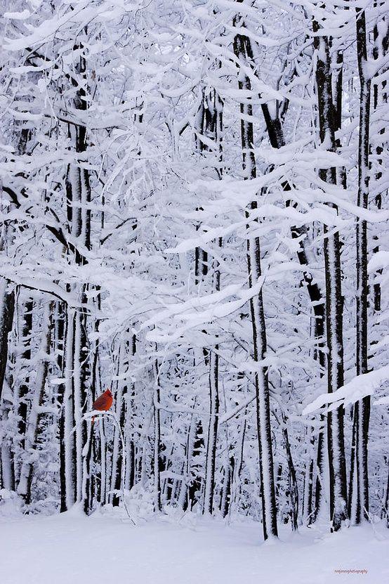 Tranquil Forest Snow Scene With Red Cardinal Toni Kami Joyeux Noël - 30 wonderfully wintery scenes around world