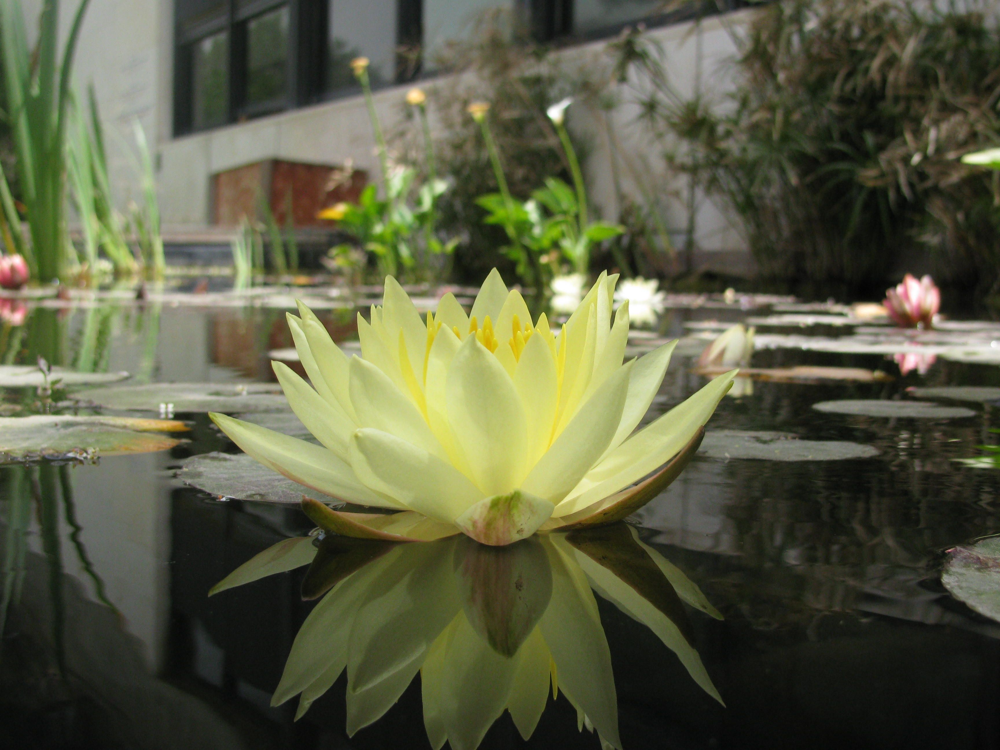 Water lily, Jerusalem Museum (With images) Beautiful