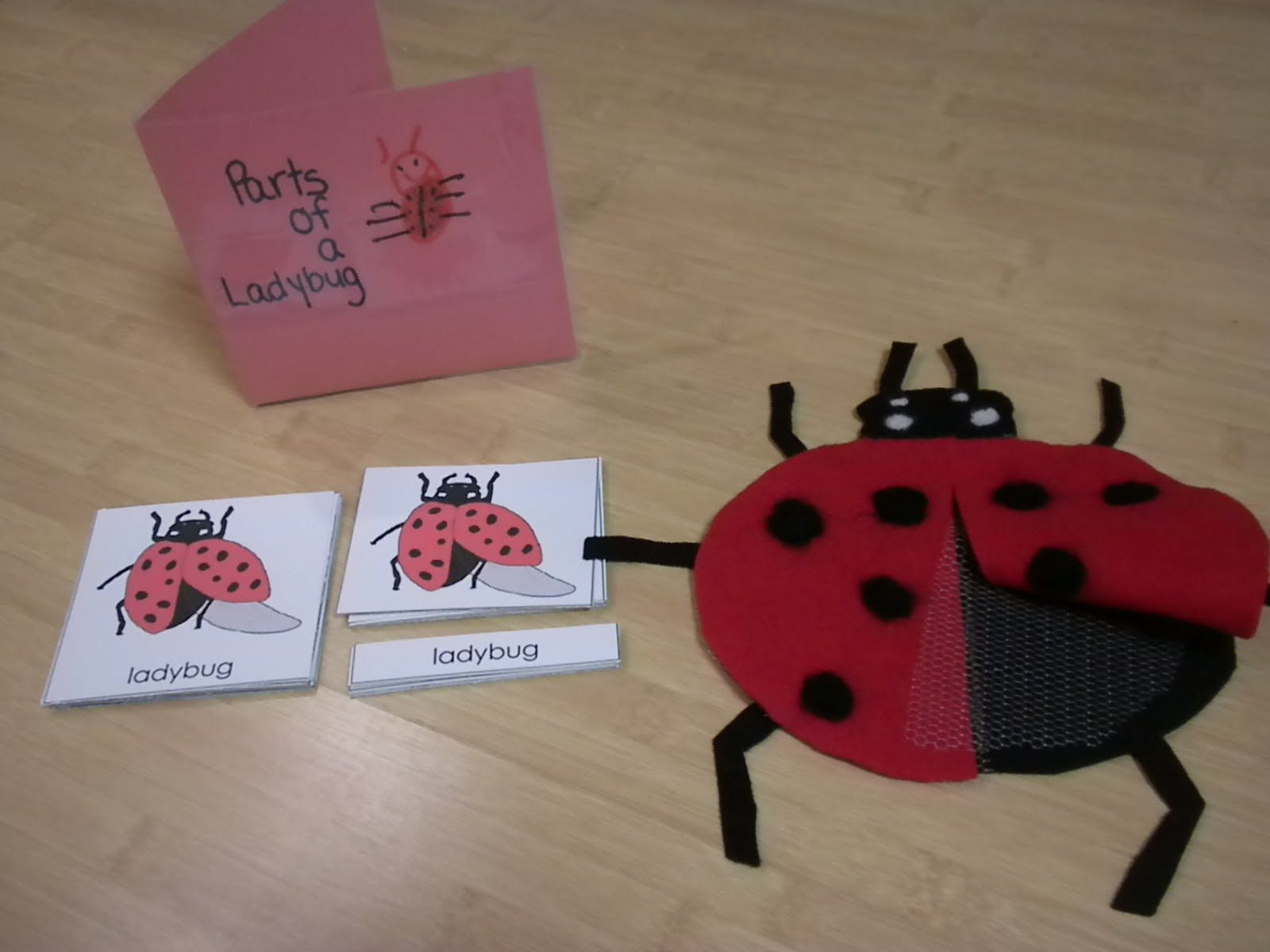 Montessori Inspired Insect Resources And Activities For