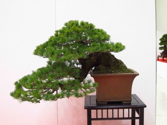 Pin By A Maestria On Best Bonsai Pictures In 2020 Bonsai Plants Beautiful Tree