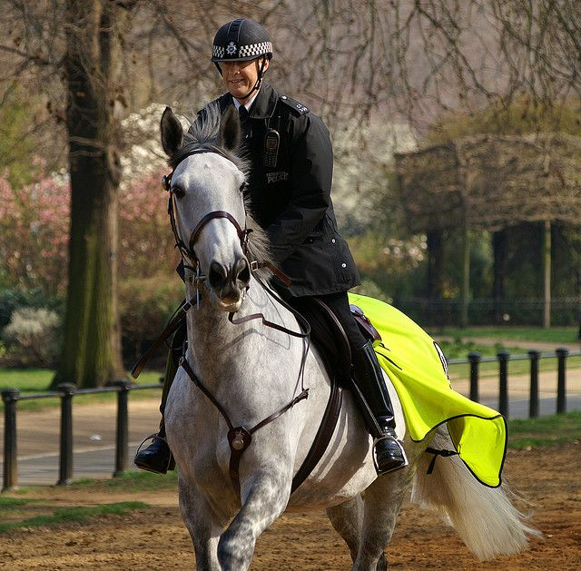 Police Horse Hyde Park London Hyde Park London Horses Police