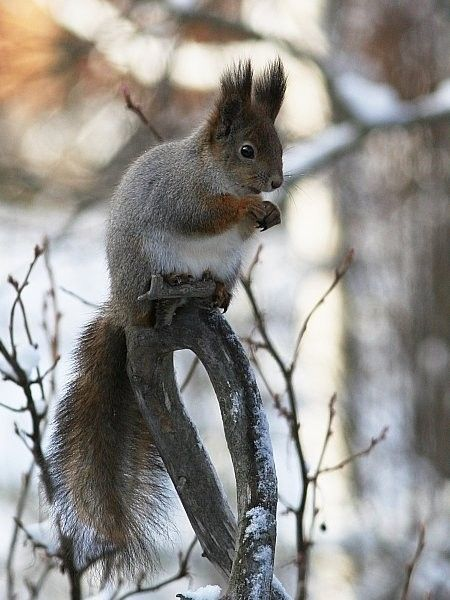 Oravan talvi