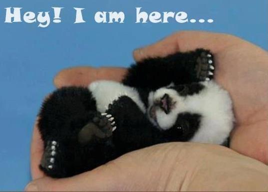 Hey I Am Here!