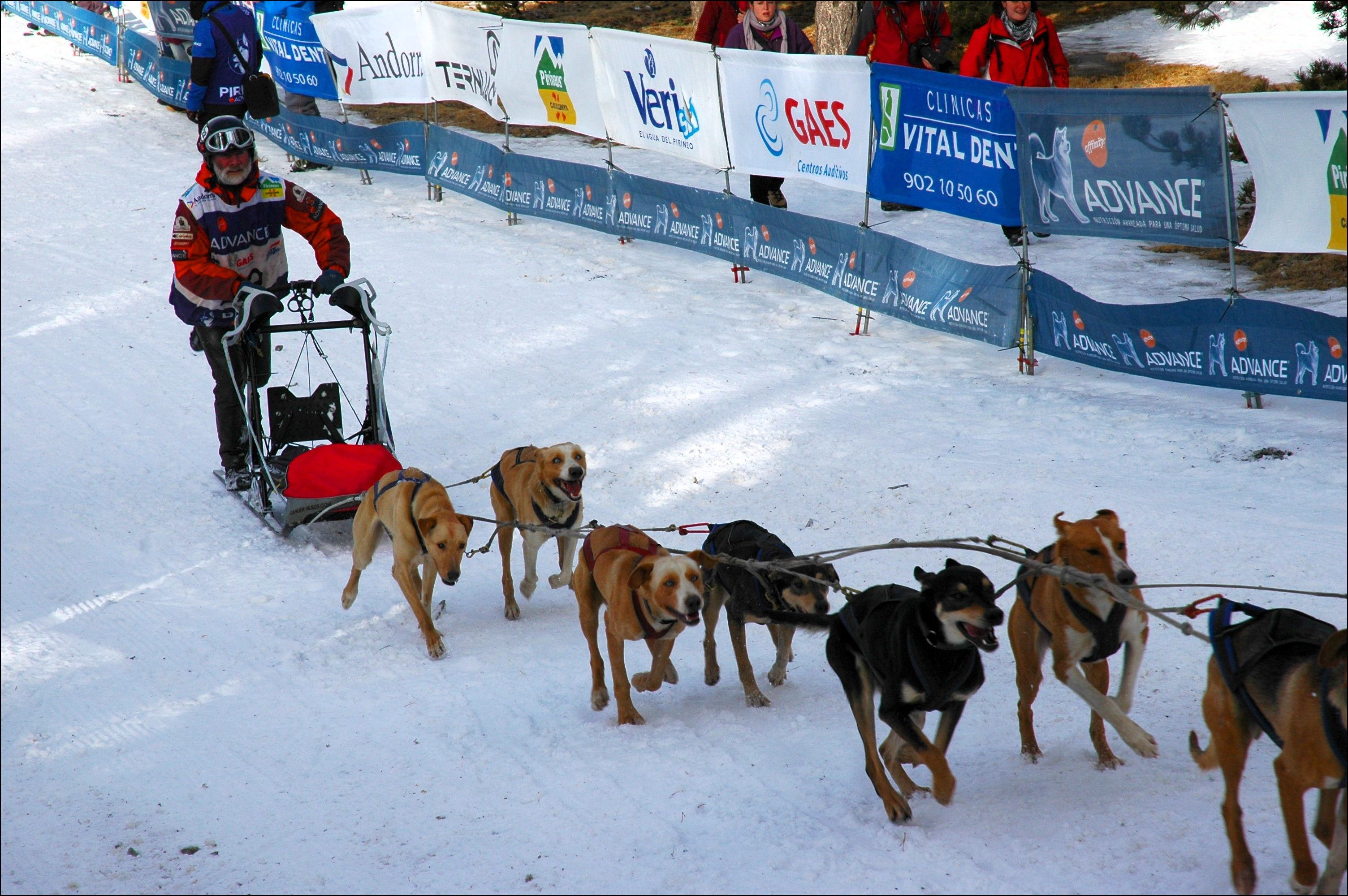 Iditarod Unit Study These Temporary Tents By Aadel Bussinger