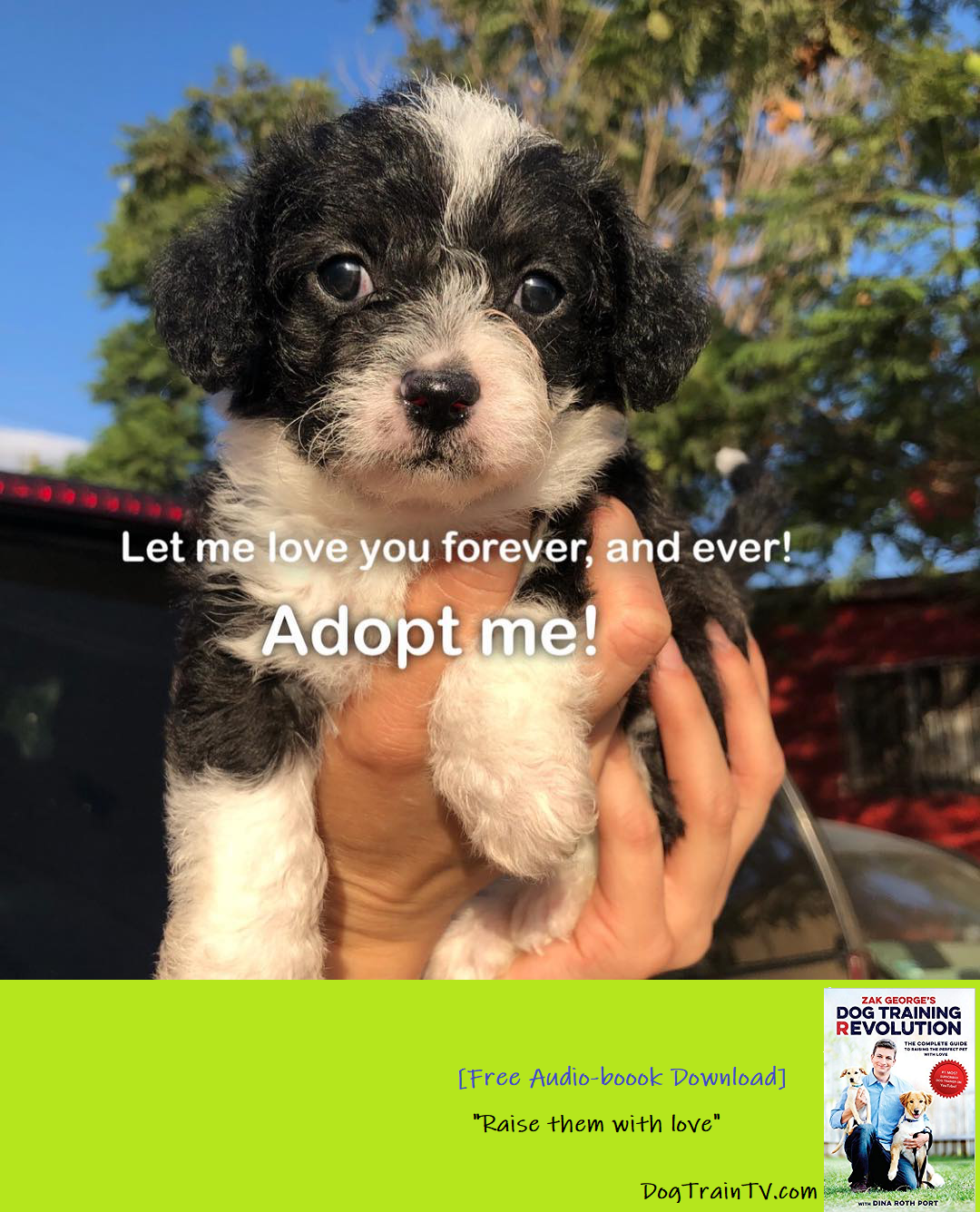 What S Included In Every Adoption 1 30 Days Of Food 2 The 1st Month Of Flea Tick And Deworming Medication 3 Toys Treats Dog Training Dogs Dog Trainer