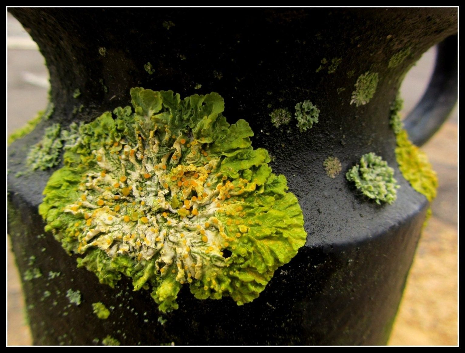 Lichen. Photo.  www.saskia-lauth.com