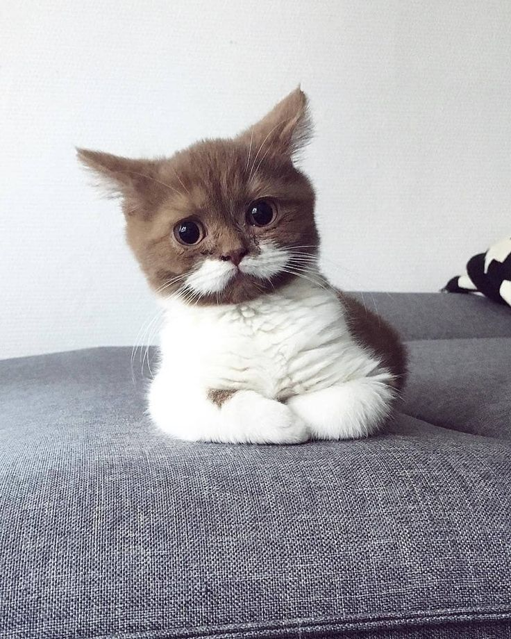 𝕡𝕚𝕟𝕥𝕖𝕣𝕖𝕤𝕥•𝕕𝕠𝕩𝕚𝕖𝟞𝟛𝟜🌊🍊 Cute cats and kittens, Cute animals