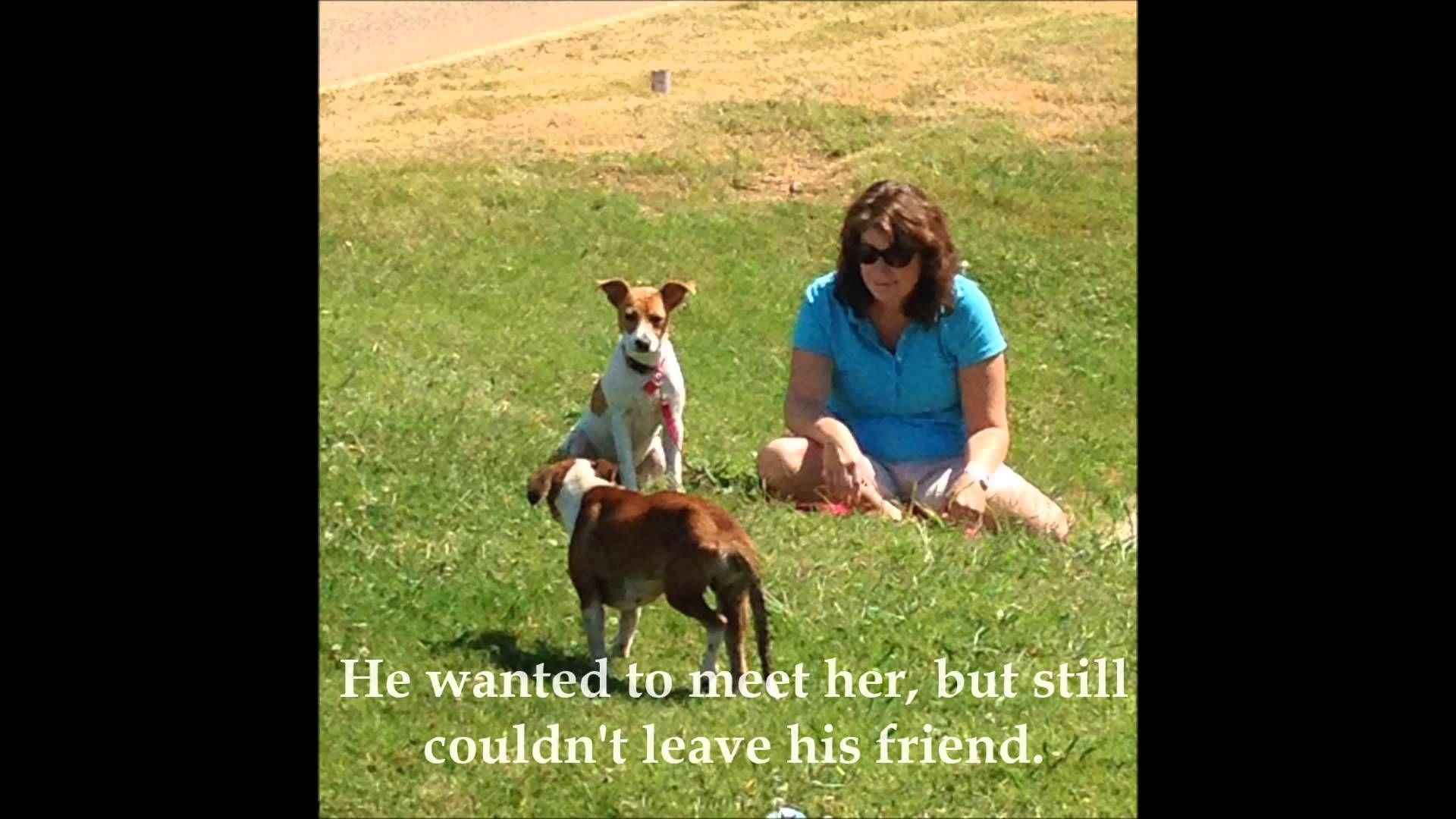 Faithful street dog won't leave his companion Street