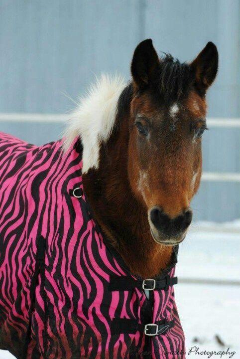 Candy Cane ~ Pony in Pink Zebra Winter Blanket!