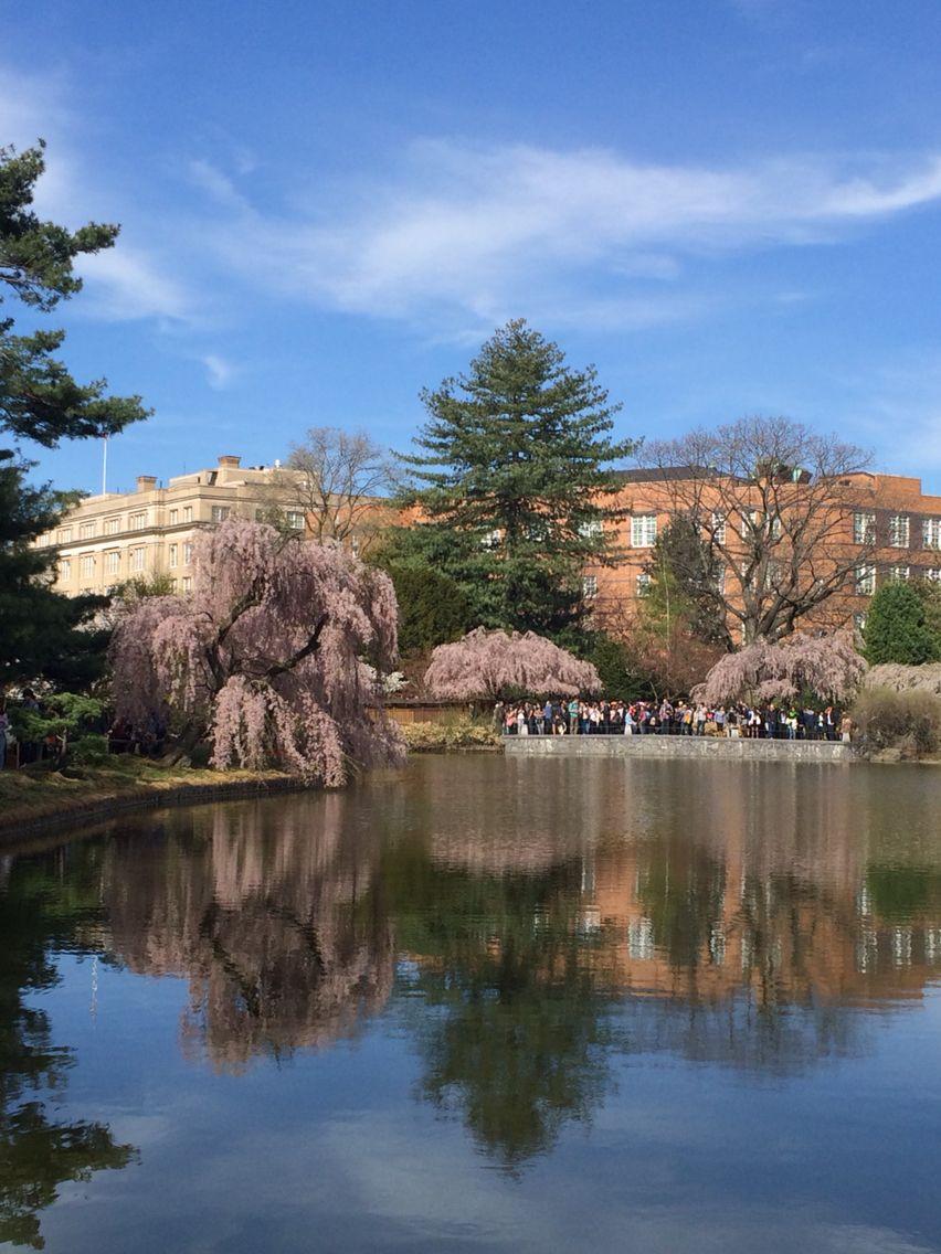 Blue Skies.. Botanical Gardens
