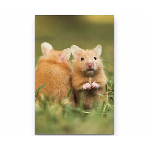 East Urban Home On Canvas Pet Day Hamster Breeds Cute Animals