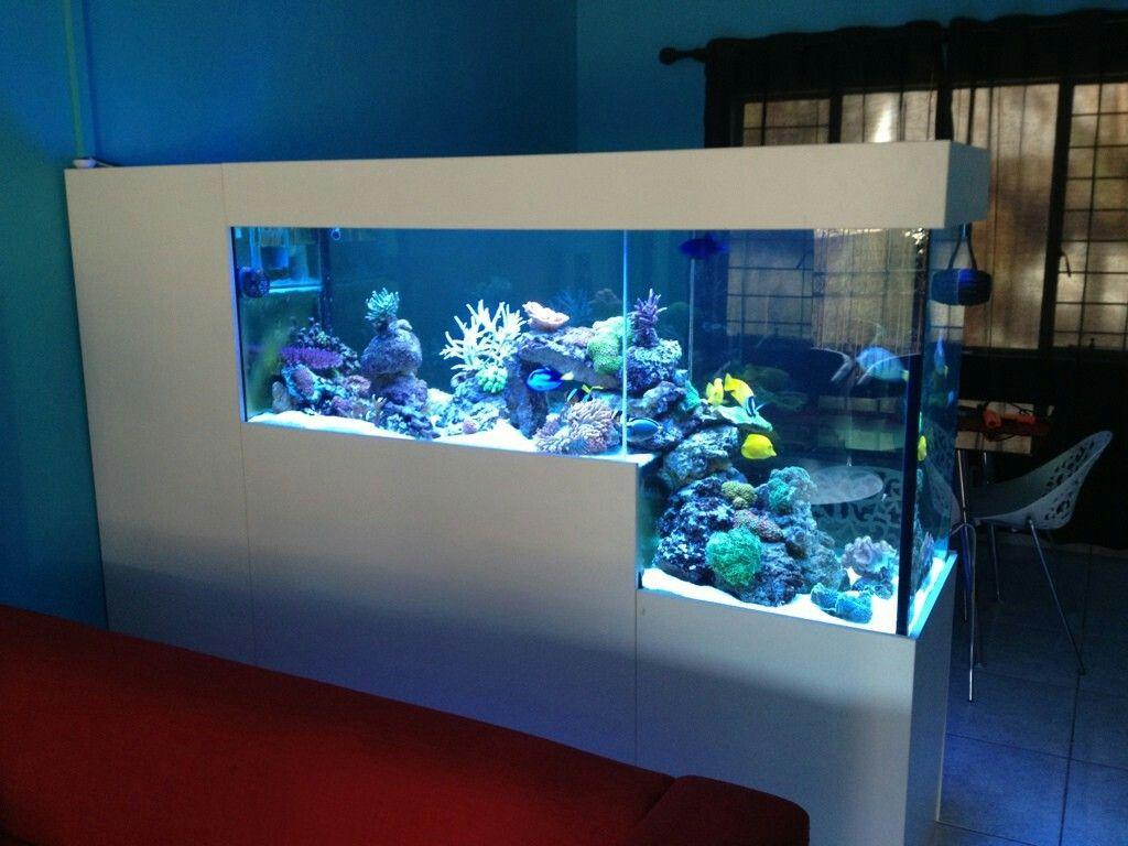 Pin By Gisele Bourse On Reef Aquarium Aquarium Aquarium Design Aquarium Fish