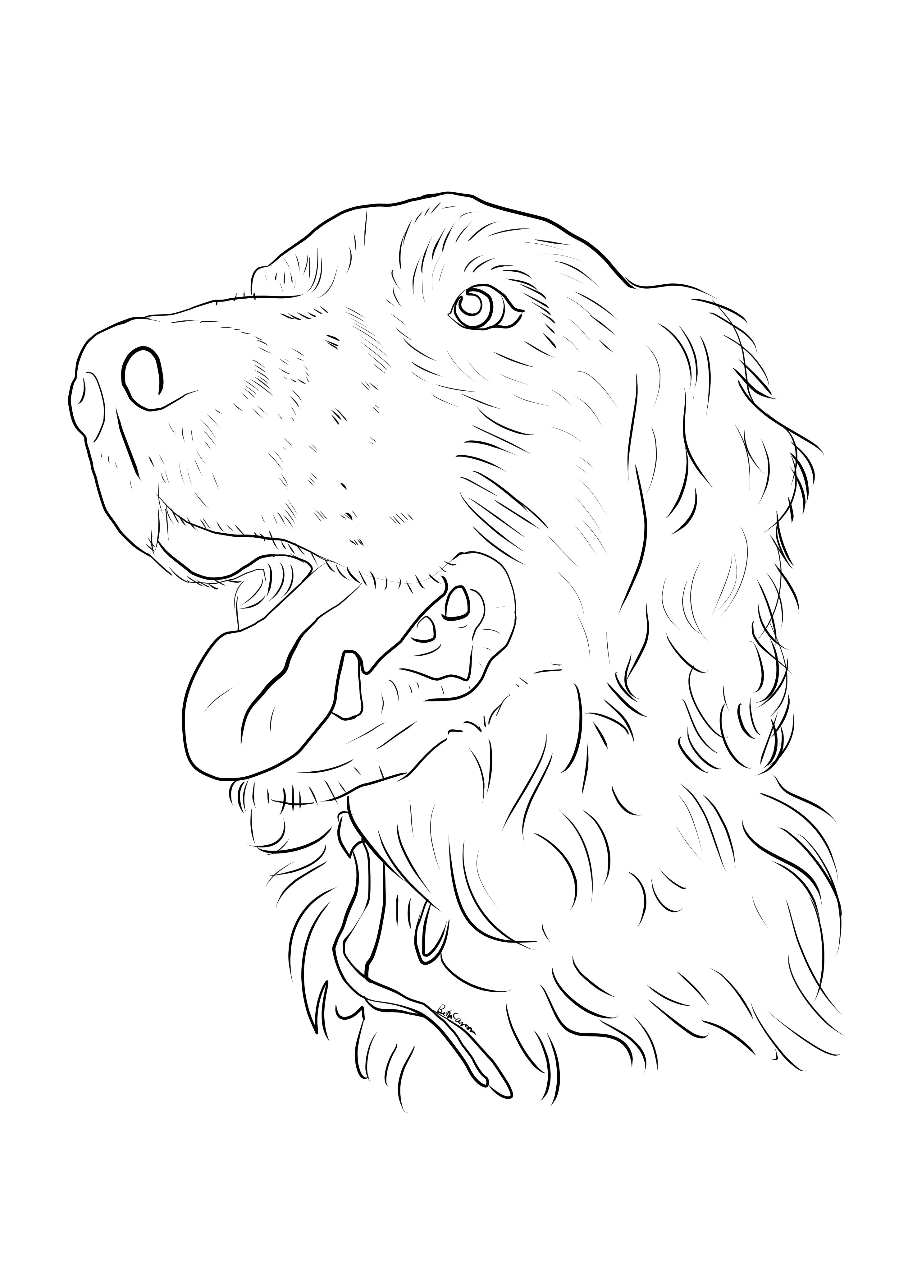 childrens coloring pages springer spaniel | Springer Spaniel coloring page! Beth Carson 2014 ...