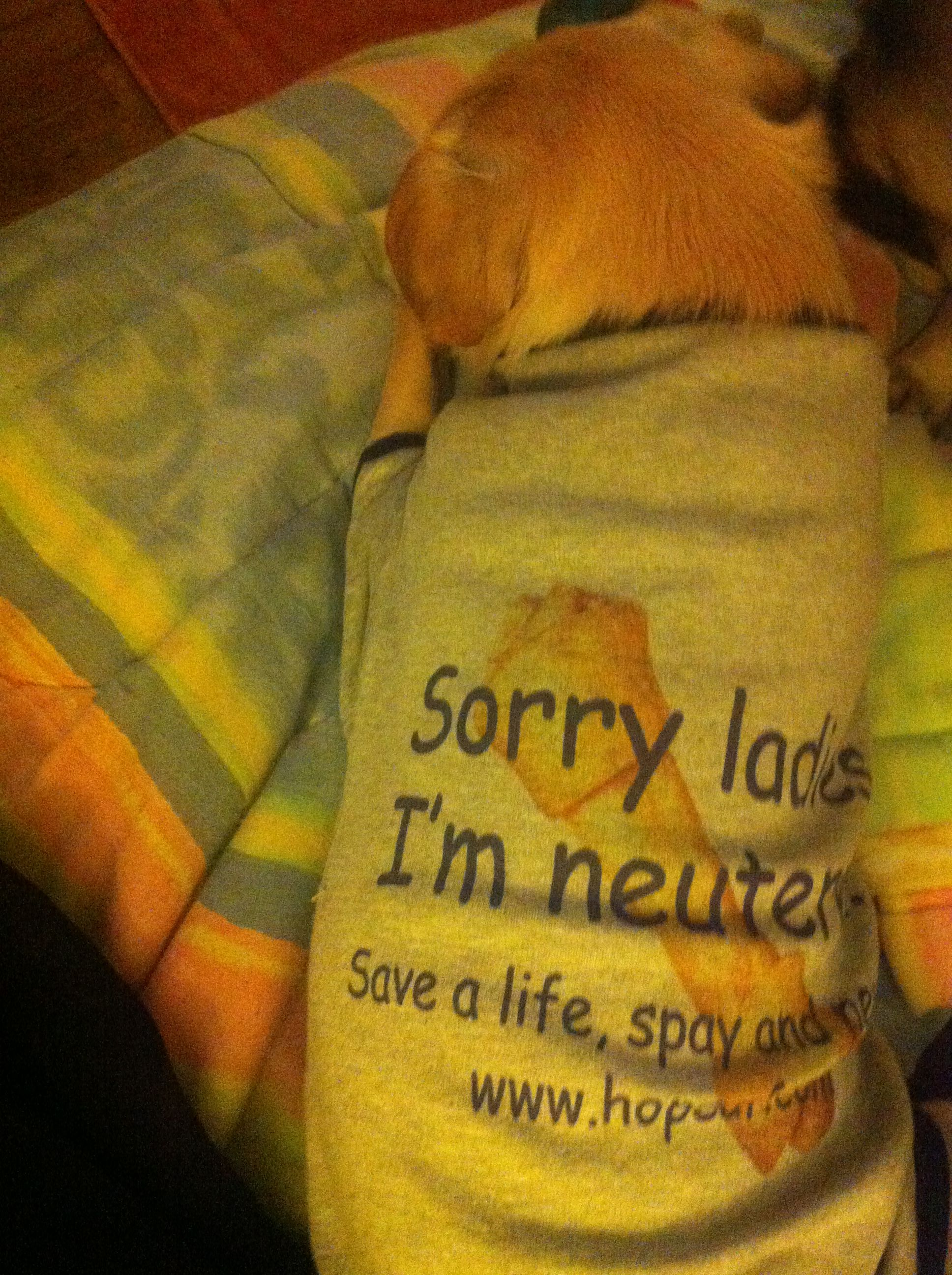 "It fits!  ""Sorry Ladies, I'm neutered!"""