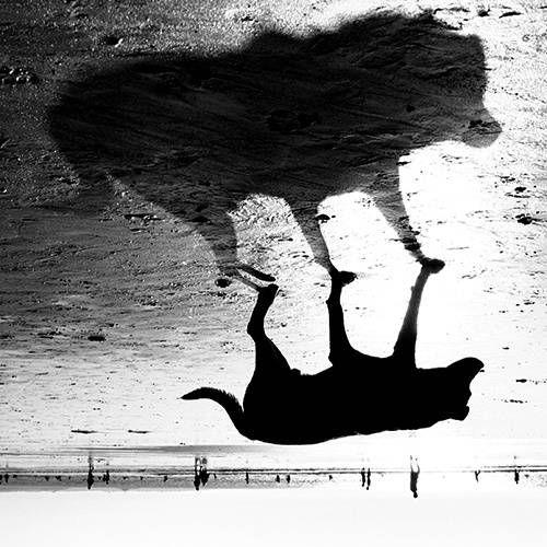 Appearance, Fotografia Digital Animais original por Henrique Frazão