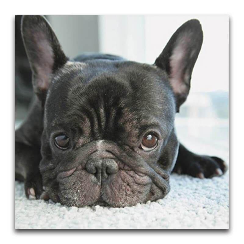 Diamond Painting French Bulldog Small Black Dog Diy Dog Stuff