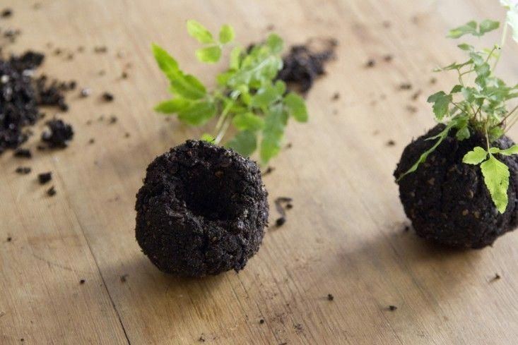In the tradition of Japanese kokedama—which uses moss to retain moisture instead of a pot—here are instructions for making a self-sufficient houseplant that needs nothing but a bit of water and sun to keep it happy: #Kokedamasmateriales