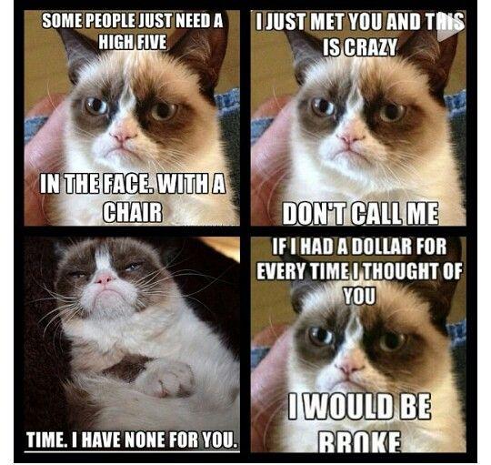 She S So Fluffy Funny Grumpy Cat Memes Grumpy Cat Humor Grumpy Cat Quotes