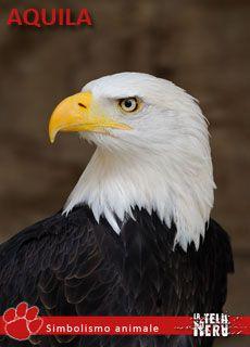 Simbolo animale: significato dell'Aquila tra mitologia ed esoterismo
