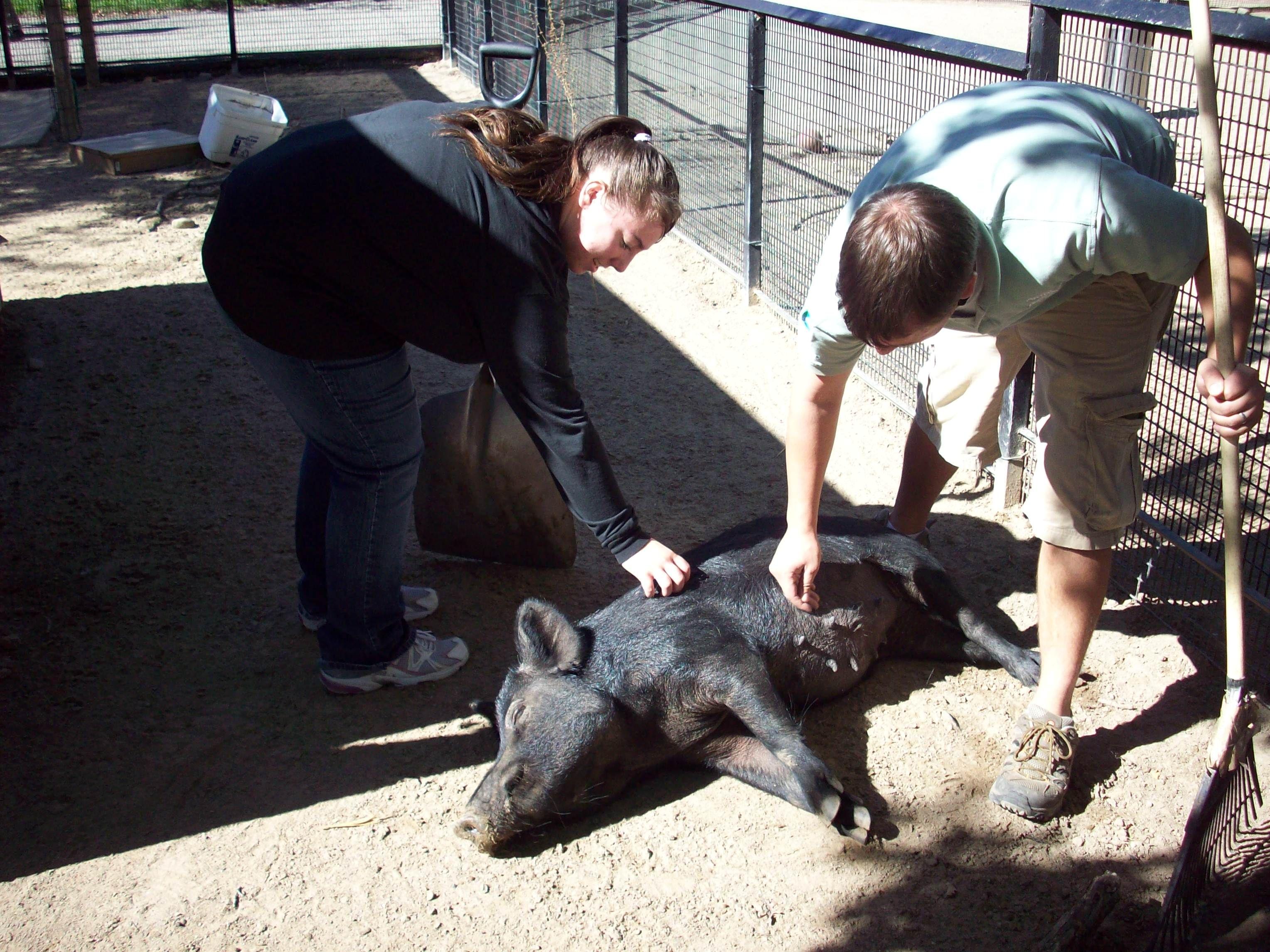 16++ Animal science degree jobs ideas