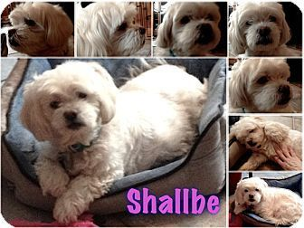 Location East Hanover Nj Rescue Id Shallbe Organization Contact Bichon Frise Rescue Of Northern New Jers Coton De Tulear Dogs Dog Adoption Bichon Frise Rescue