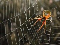 Spider as your animal guide/totem