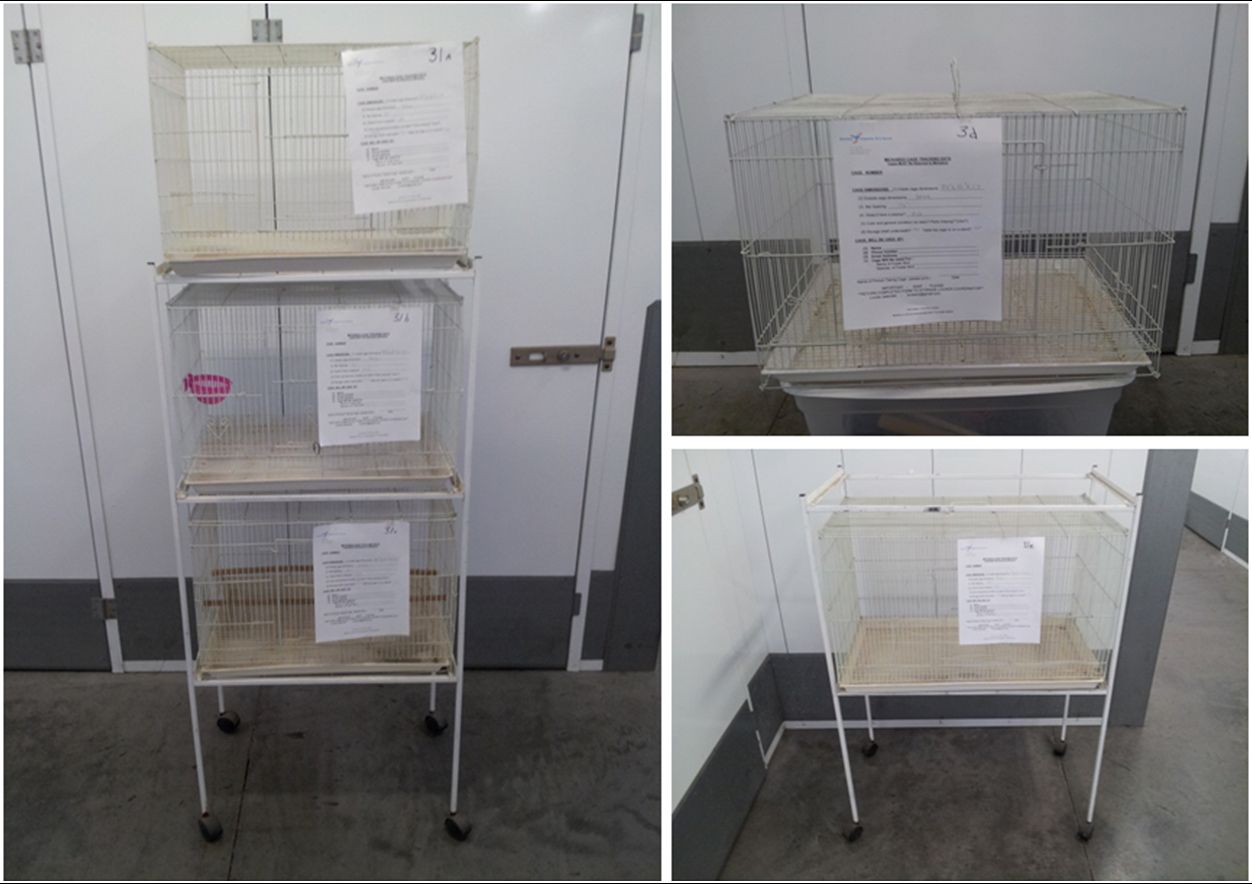 """Cages #31 (a), (b), (c), (d), (e)  –  AVAILABLE. 24""""x16""""x17"""", B/S ½""""; thin bars, white, light weight so easy to transport/move around,  we have 5 of these, and we have a stand which allows you to stack 3 of them if you are pressed for room. Some need washing. Status - available."""