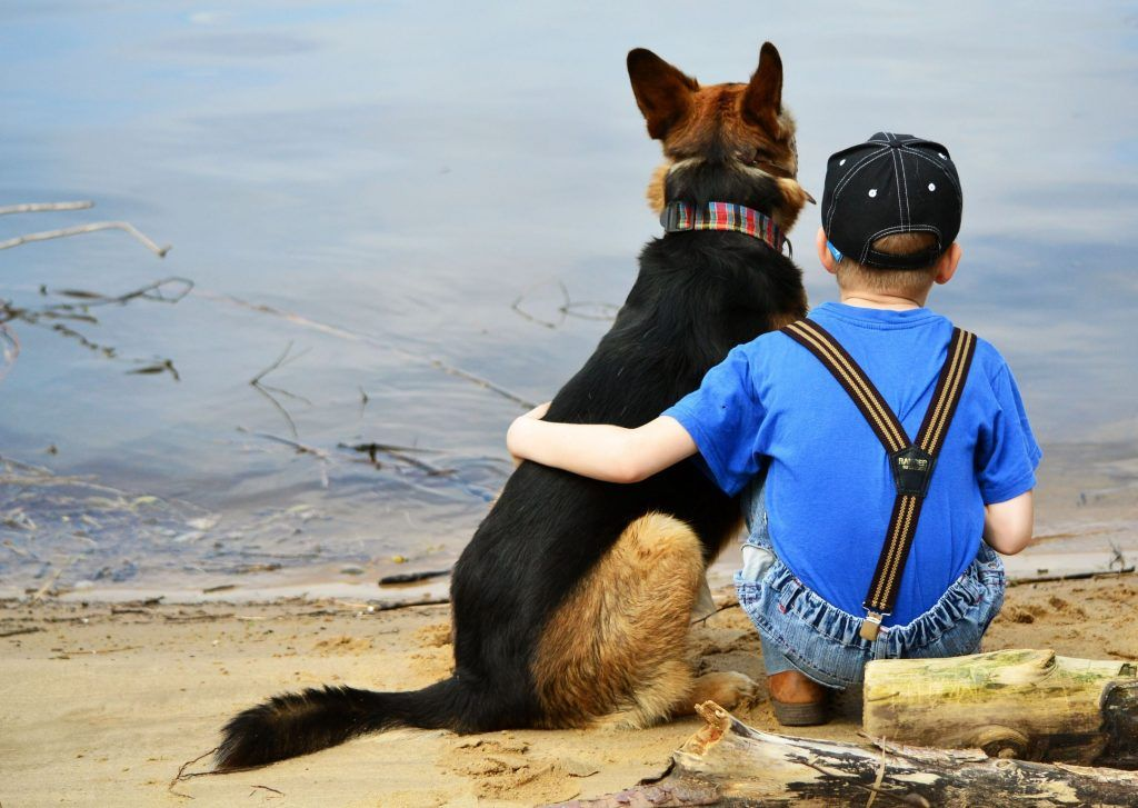 Watch out! You Could Be Shortening Your Dog's Life  - Generally, dogs are known as the best friends of humans. This strong relation of friendship isgenerated from the mutual attention; dogs make effor... -   .
