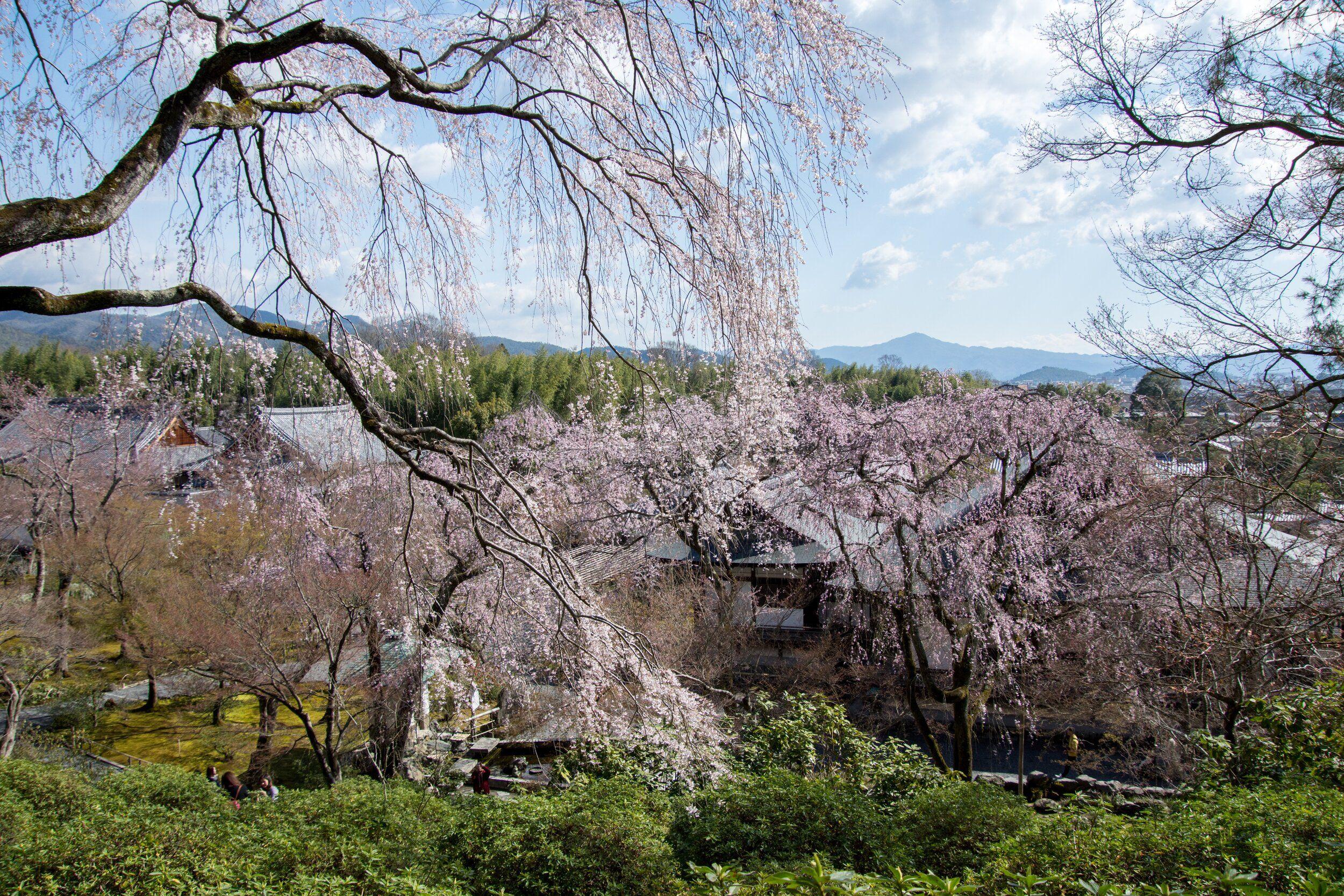 Pin On Trip Planning Japan