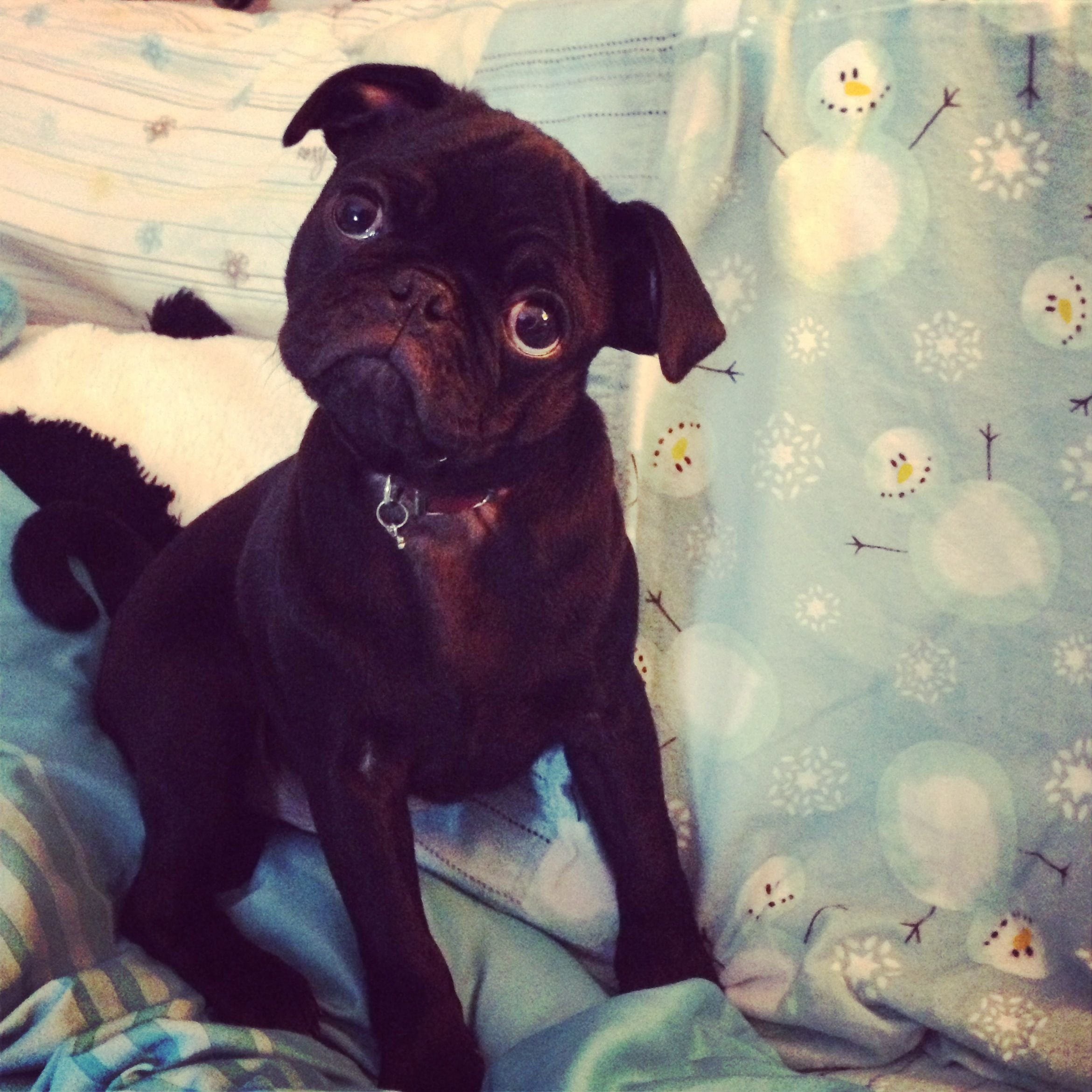 images about pug on pinterest pug love pug and hipster