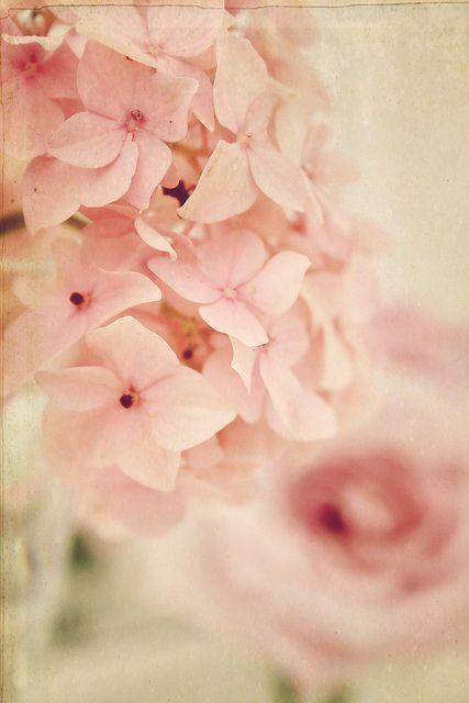 hydrangea - one of my favorite flowers.