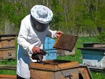 Backyard Bee Keeping For Beginners