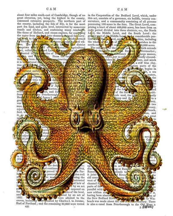 Octopus Print Front, Digital Art Illustration Wall Art Wall Decor ...