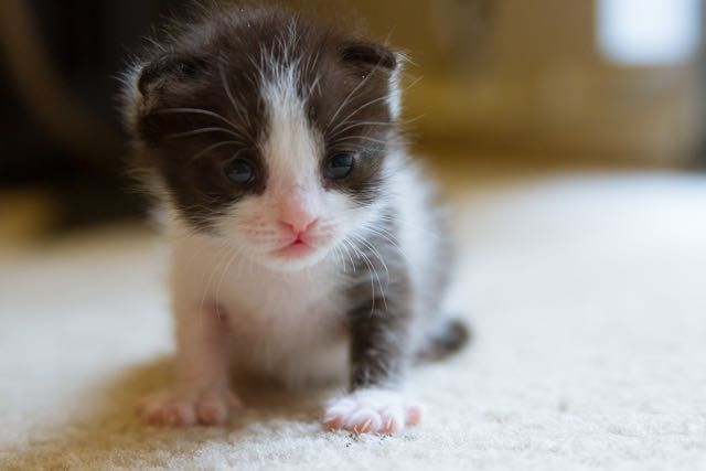 Orphaned Kitten Less Than 12 Hours Old Fights For Her Life Now 2 Years Later Kittens Cute Little Animals Cats And Kittens