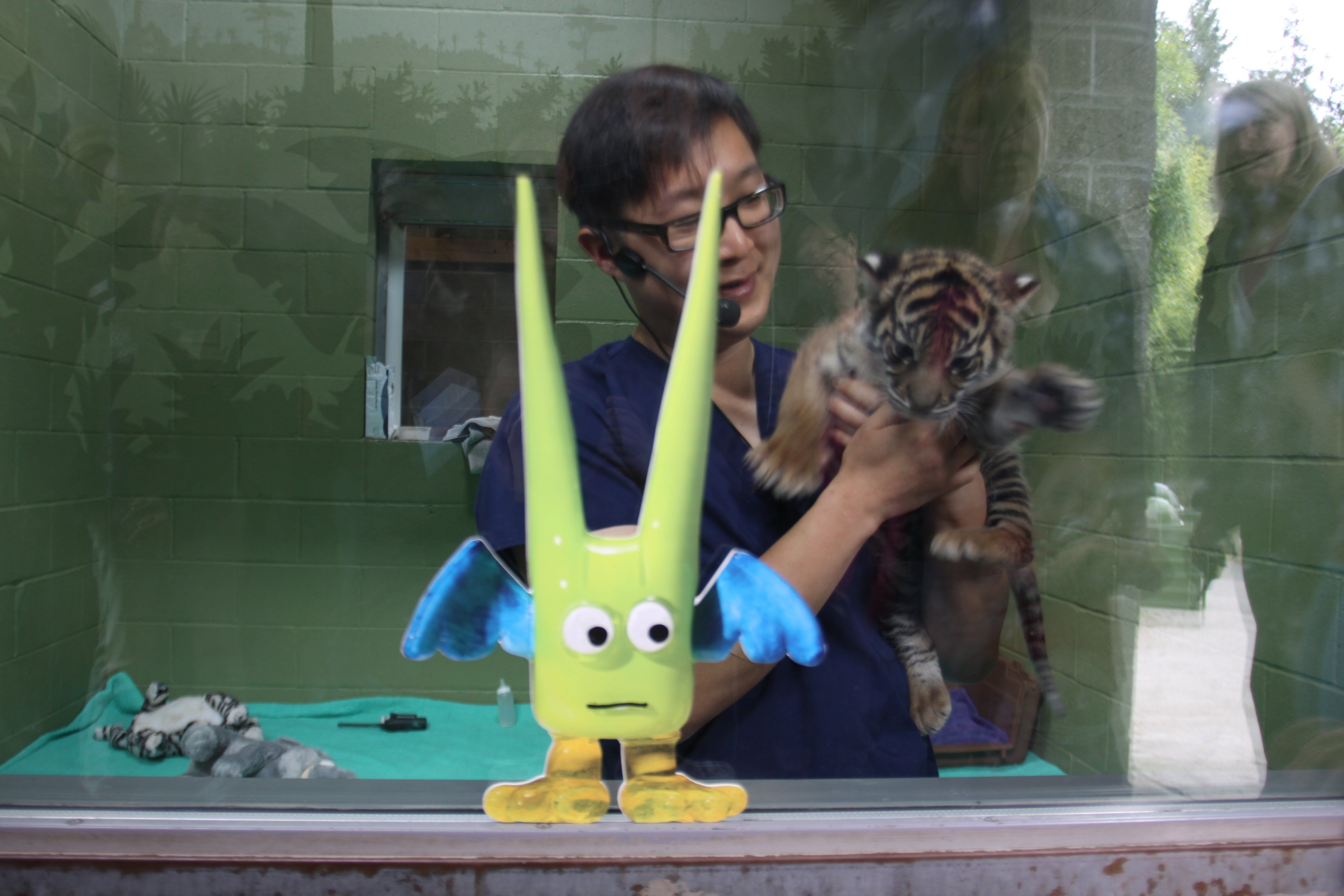 Green Guy went to Point Defiance Zoo and Aquarium. He loves the tigers!