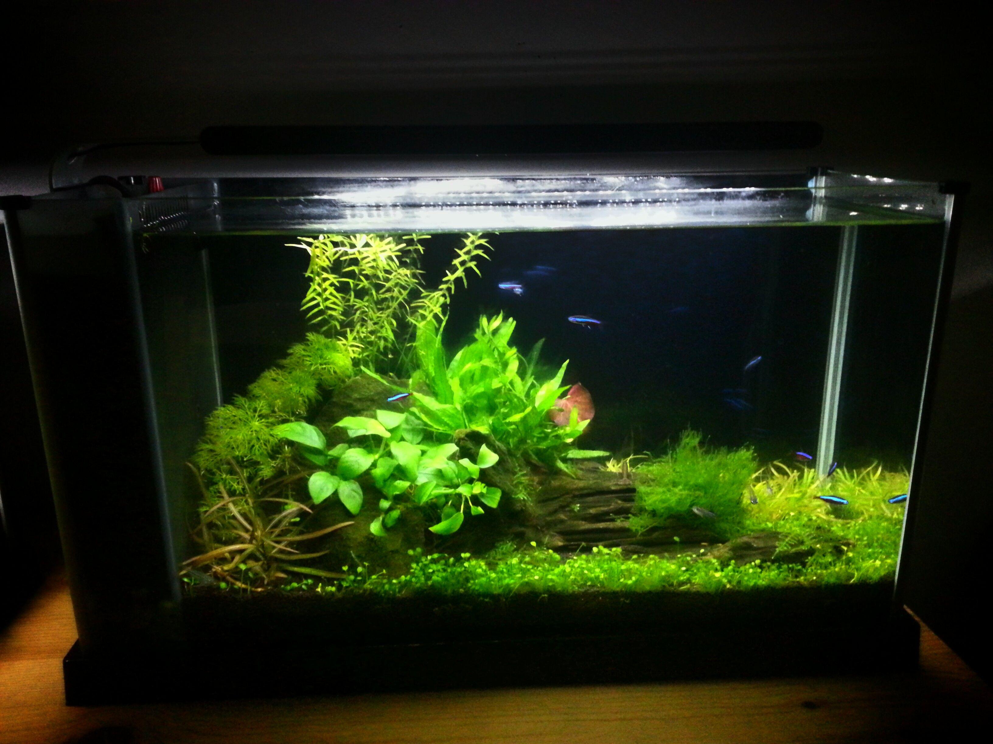 My planted nano tanks and 15 000 gallon koi pond i 39 m open for Plante nano aquarium